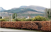 J3630 : The wooded Mourne outlier of Drinnahilly viewed from Bryansford Road, Newcastle by Eric Jones