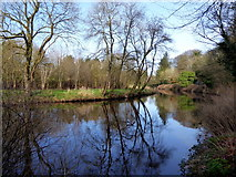 H4772 : Reflections, Camowen River by Kenneth  Allen