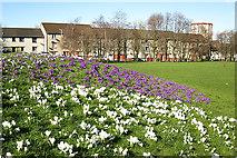 NT2276 : West Pilton Gardens by Anne Burgess