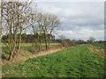 SE6946 : Field edge and drain near Cheesecake Farm by Jonathan Thacker