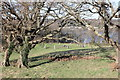 SH5772 : 1931 Eisteddfod Gorsedd Stones, Bangor by Jeff Buck
