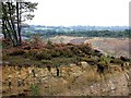 TQ7109 : Heathland in Bexhill Brick Pit off Turkey Road by Patrick Roper