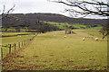 SH7676 : Sheep grazing on a former golf course by Bill Boaden