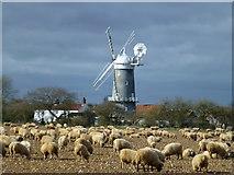 TF7632 : Bircham Windmill, Great Bircham, Norfolk by Richard Humphrey