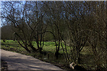 SP5174 : Nature reserve along old railway path by Robert Eva