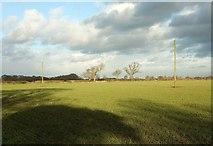 SE3664 : Trees and field near Newfields Farm by Derek Harper