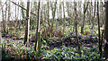 TG1504 : Swampy ground beside the path to Norwich Road by Evelyn Simak