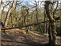 SK2579 : The money tree in Padley Gorge by Graham Hogg