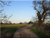 SE6548 : Bridleway to Langwith Lodge by Jonathan Thacker