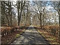NJ1565 : Beech hedge lined minor road at Westfield by valenta