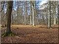 NJ1565 : Westfield Woods by valenta