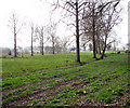 TG1409 : Poplars and drainage ditches in pastures by Evelyn Simak