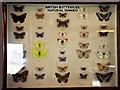 TQ7729 : Dwarf British butterflies display by Patrick Roper