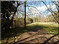 TL8782 : Path, Thetford by Hamish Griffin