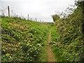 SY4394 : Symondsbury, wild daffodils by Mike Faherty