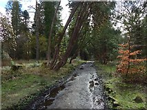 NS3882 : Path in Balloch Park by Lairich Rig