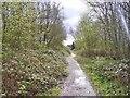 SO9594 : Community Wood Path by Gordon Griffiths
