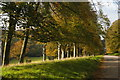 SX0963 : Lanhydrock: avenue of trees along the main drive by Christopher Hilton