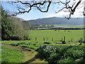 SU8518 : Spring in Bepton Churchyard (iii) by Basher Eyre