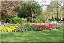 TQ2979 : Flower bed, St James's Park, Westminster by Julian Osley