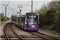 TQ2867 : Tramlink by Peter Trimming