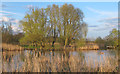 TM4792 : Looking to trees on the Norfolk bank from North Cove by Roger Jones