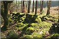 SX7674 : Mossy wall, Bagtor Woods by Derek Harper