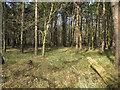 TL8378 : Sandgault Plantation by Hugh Venables