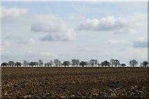 TQ9293 : Paglesham Skyline by John Myers