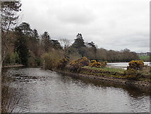 C9216 : Movanagher Canal (2) by Robert Ashby
