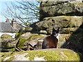 TQ5639 : Cat on Rusthall Common by Marathon