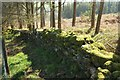 SX7574 : Mossy wall, Bagtor Woods by Derek Harper
