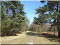 TQ4133 : Sandy path on Ashdown Forest by Marathon