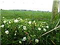 H3385 : Wild plants, Kilstrule by Kenneth  Allen