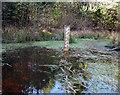 SU6263 : Gauge Board in a Pond by Des Blenkinsopp