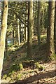 SX6674 : Little Newtake Plantation by Derek Harper