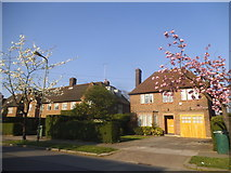 TQ2688 : Houses on Kingsley Way, Hampstead Garden Suburb by David Howard