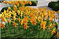 TA0928 : Lego daffodil's by Ian S