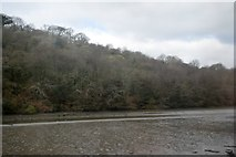 SX2555 : View across the East Looe River by Trevor Harris