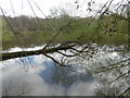 TQ6289 : Old Hall Pond in Thorndon Country Park South by Marathon