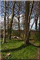 SJ3248 : The Big Wood, Erddig by Christopher Hilton