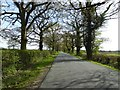 SO9862 : Tree-lined road by Philip Halling
