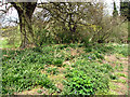 TG3203 : Hellington & Rockland community reserve (plants) by Evelyn Simak