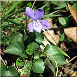 TG3204 : Hellington & Rockland community reserve (plants) by Evelyn Simak