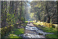 SK2786 : Wyming Brook Track, Sheffield by Andrew Tryon