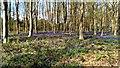 SU2567 : Bluebells, Cobham Frith by Brian Robert Marshall