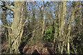 TL3858 : Starve Goose Plantation by N Chadwick