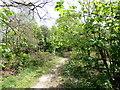 TQ4621 : Path in Lake Wood, Uckfield by PAUL FARMER