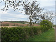 NT5675 : Hedgerow at Nether Hailes by M J Richardson