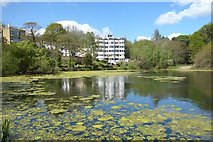 TQ2686 : Pond in The Vale Of Health by Des Blenkinsopp